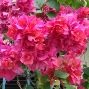piante ornamentali e fiori