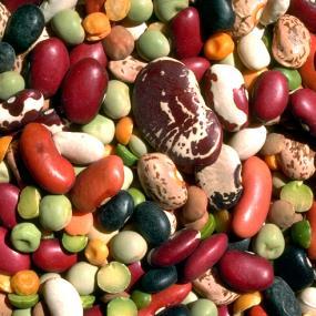 ortaggi e legumi secchi
